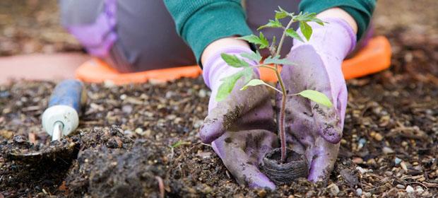 Open Sky Organic Gardener