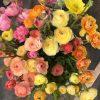 open sky farm fresh cut flowers