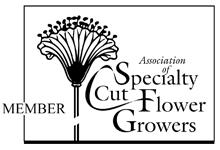 Member Speciality Cut Flower