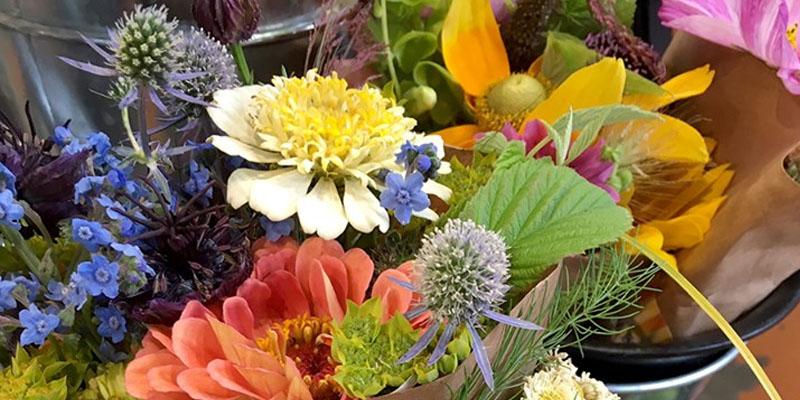 August Flowers Open Sky Organic Farm